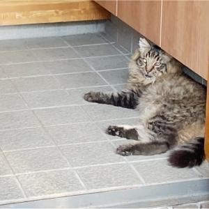 【猫】モカ通院と、これから
