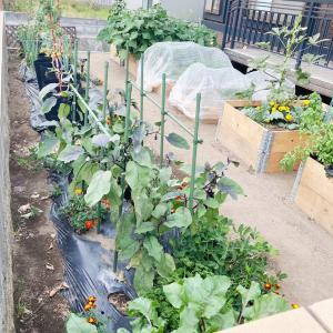 【家庭菜園】家庭菜園のざっくり収支