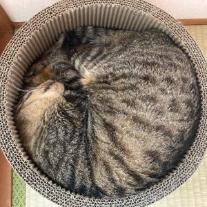 【猫】猫エイズのこと