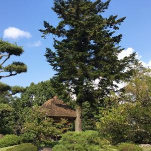 日本庭園植木剪定セミナーに行ってきました!