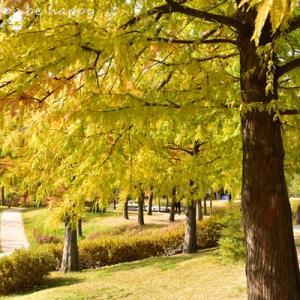 ソウルの紅葉、色づいています。