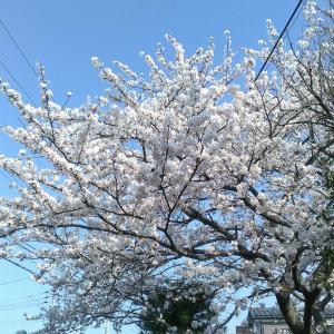 〇睡眠と寝相 について  創始者山田洋のブログ「希望」より転載