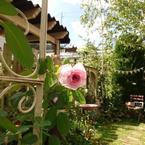 ガートルードジェキル~9月半ばの庭