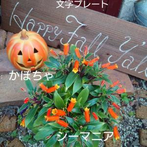 お庭のハロウィンコーナー