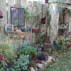 半日陰の花壇の植え替え