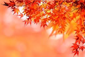 秋の匂い♡