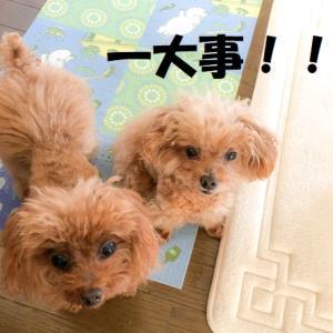 ペット保険 改定!! 保険料が高い・・・