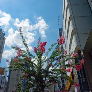 街路樹(渋谷駅からBUNKAMURA方面へ)