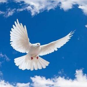 「全国成和合唱コンクール」課題曲『信仰の翼』