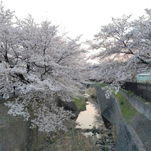 ◆お花見ジョギング