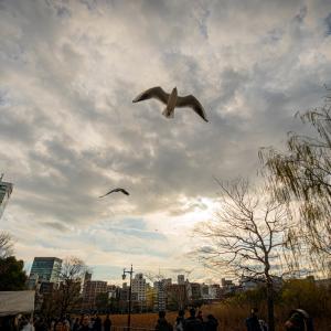 【287】台東区上野公園 蓮池に吹く乾いた風