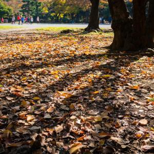 【266】江東区清澄 清澄公園の色づき