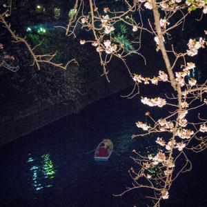 【277】千代田区九段南 光溢れる桜祭り