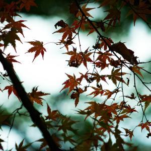 【267】練馬区光が丘 秋の収穫祭