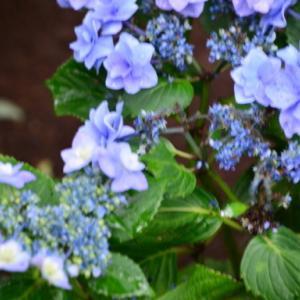 梅雨空や恵雨となりて花の冴ゆ