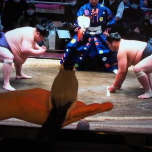 相撲とかなこ 3