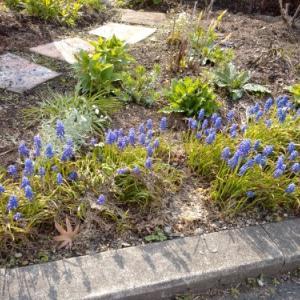 春の庭 たちあがり