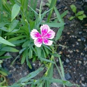 種から育てた花が咲く