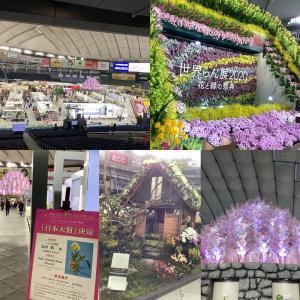 東京ドーム 2020年蘭展 千葉 三陽メディアフラワーミュージアム 春のパレード