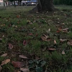 桜落ち葉染め 草木染め