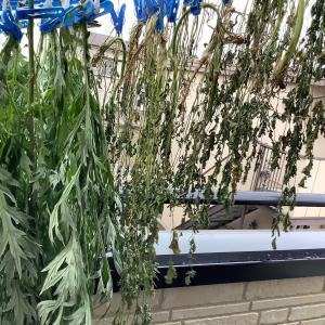 乾燥よもぎ 乾燥パクチー 草木染め 材料 制作