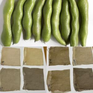 そら豆 さや染め 草木染め 色見本