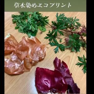 草木染めエコプリント サンプル作り ①