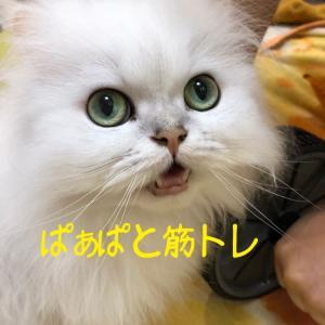 ぱぁぱと筋トレ