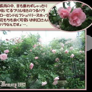 薔薇の庭から~…。