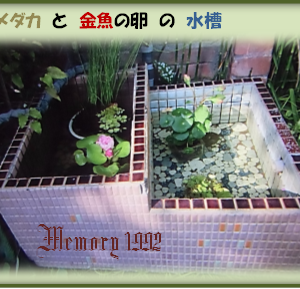 """Garden用レトロな外灯""""&金魚""""の出産で~…"""
