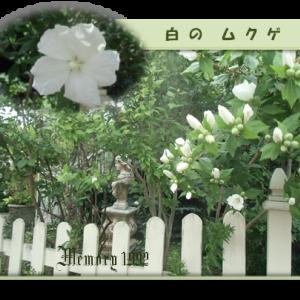 """今日の庭""""&チャイルドチェアー他"""""""