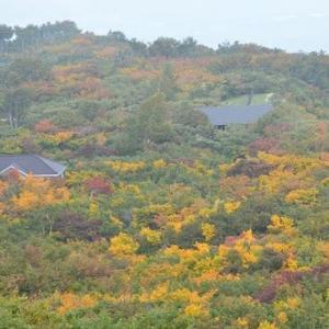 鳥海山祓川の紅葉は今見頃