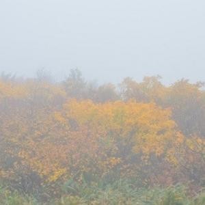月山の紅葉は雲の中。。。。