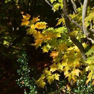 八幡平大沼 色づいた葉っぱたち