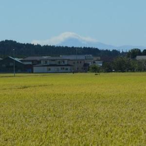 昨日の鳥海山の画像と矢島八朔祭り