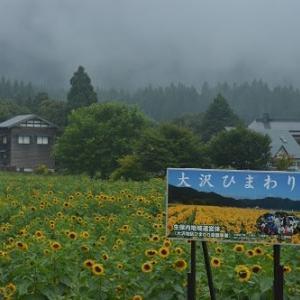 大沢地区のひまわり畑