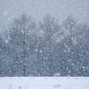 僕が北海道に来た理由④ 冬の朝に起きた大事件