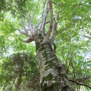 木を作る(針葉樹)