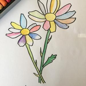 花のイラスト  トッレガーマ