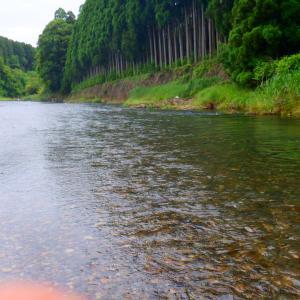 6月25日 上桂川 鮎釣り9