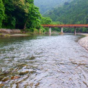 6月26日 上桂川 鮎釣り10