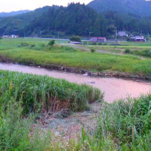 8月2日 上桂川 鮎釣り19 3日 美山川 鮎釣り20