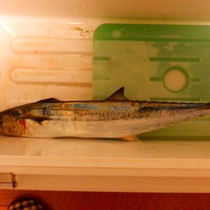 10月23日 音海方面 LSJ釣行