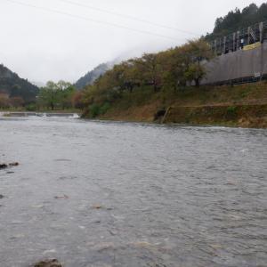 4月17日 美山川 渓流釣り14