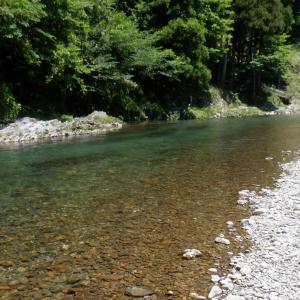 6月1日 美山川 鮎釣り1