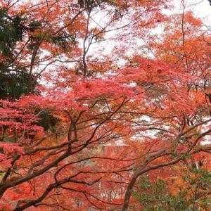 2019京都紅葉 赤山禅院