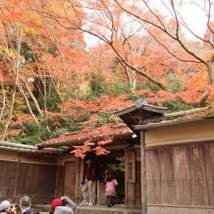 2019京都紅葉 瑠璃光院