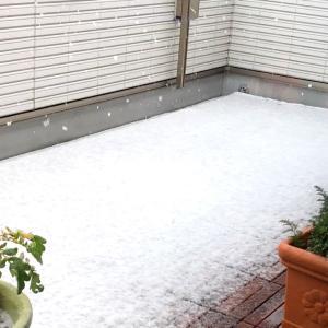 庭の小さな春と雪見ランチ