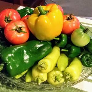 8月上旬の家庭菜園 夏野菜祭り