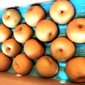 ふるさと納税の果物で当たり 酒田市「刈谷梨」